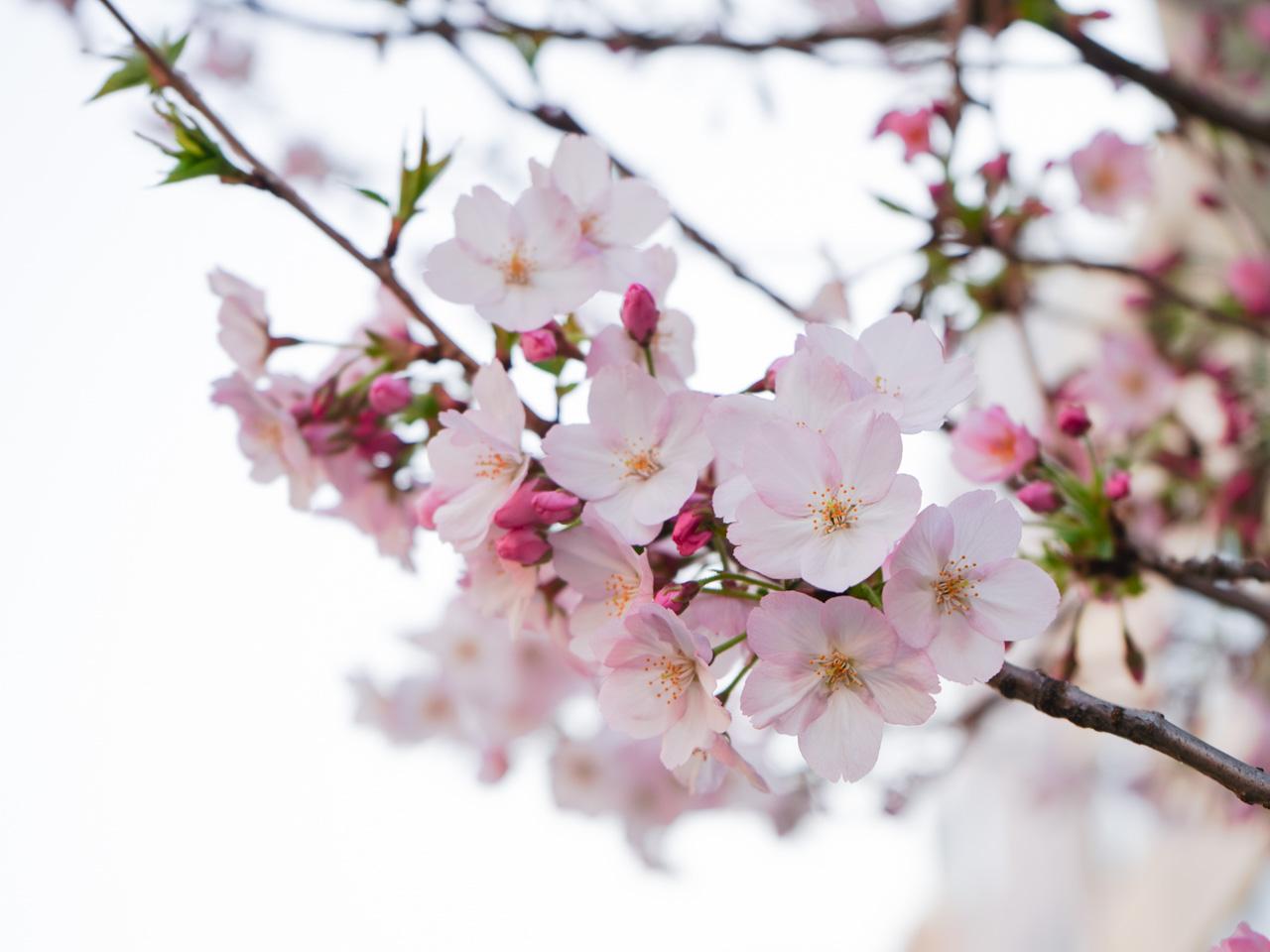 5/9 TOKYO MX1 週末ハッピーライフ!お江戸に恋して